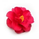 Camellia Japonica Oil